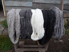 Skeins of hand-spun wool from Tristan sheep