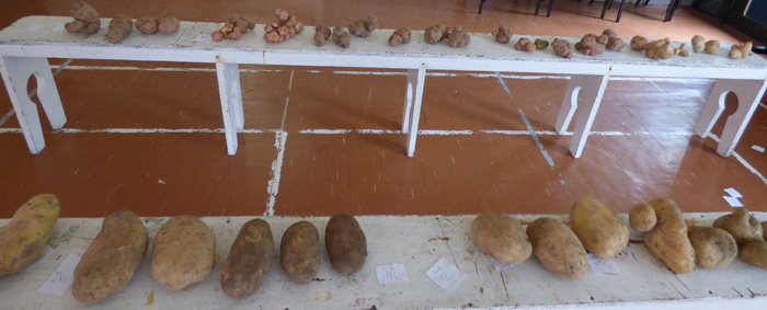 http://www.tristandc.com/images/dr-Queens-Day-2018-potato-show.jpg