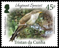 Vagrant Species Part 1, 45p, Yellow-billed Cuckoo