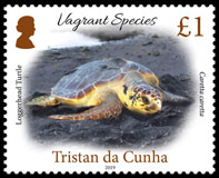 Vagrant Species Part 1, £1.00, Loggerhead Turtle