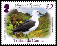 Vagrant Species Part 1, £2.00p, Indian yellow-nosed albatross